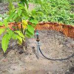Cách làm hệ thống tưới tiết kiệm nước vào gốc – Mô hình thực tế hiệu quả cao